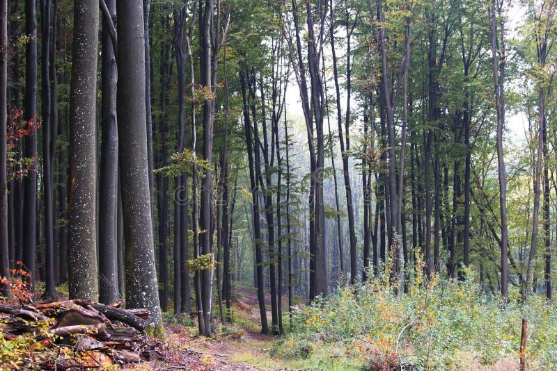 De herfstlandschap van bos stock foto