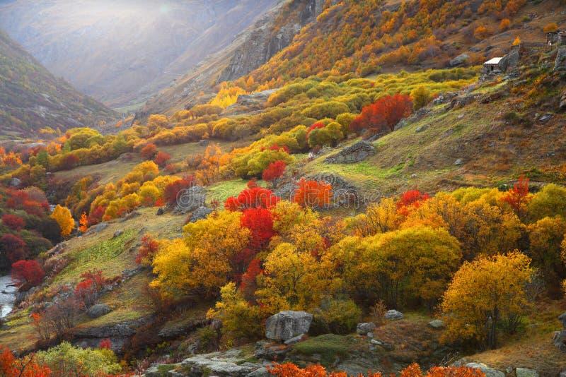 De herfstlandschap van een kleurrijk bos royalty-vrije stock afbeeldingen