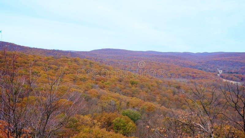De herfstlandschap van Grote Beerberg, rood bladbos stock foto's