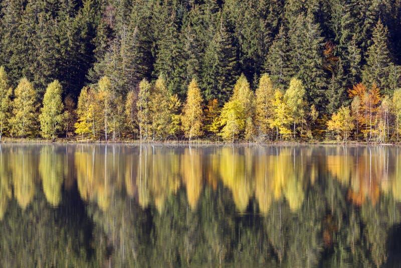 De herfstlandschap van het kleurrijke bos stock afbeeldingen