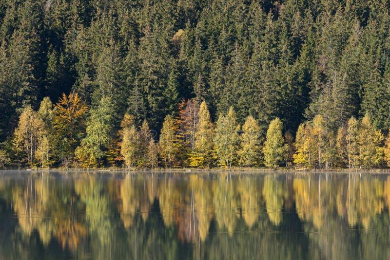 De herfstlandschap van het kleurrijke bos royalty-vrije stock afbeelding