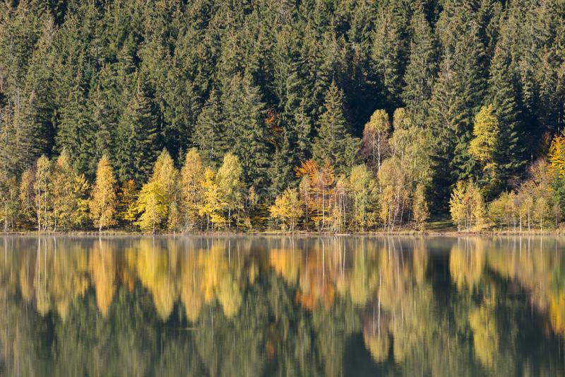 De herfstlandschap van het kleurrijke bos royalty-vrije stock foto's