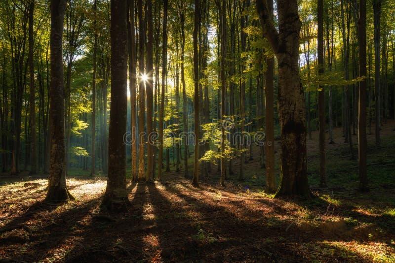 De herfstlandschap van het mooie bos royalty-vrije stock foto's