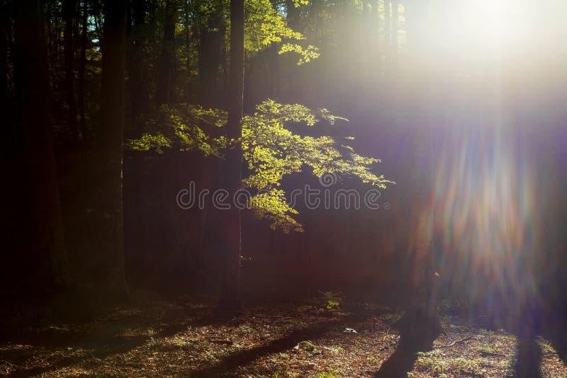 De herfstlandschap van het mooie bos royalty-vrije stock foto