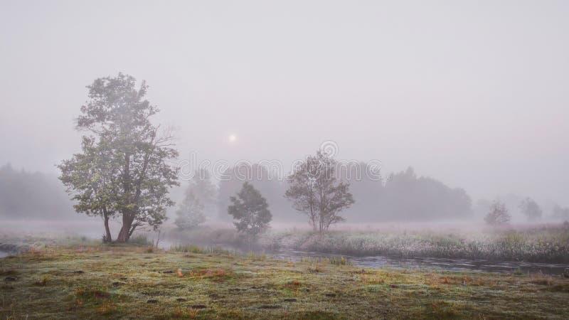 De herfstlandschap van nevelige, koude ochtend in aard donker grijs weer Droevige bomen op banken van koude rivier royalty-vrije stock foto
