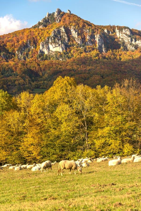 De herfstlandschap van de Sulov-rotsen en de aard, Slowakije royalty-vrije stock afbeelding