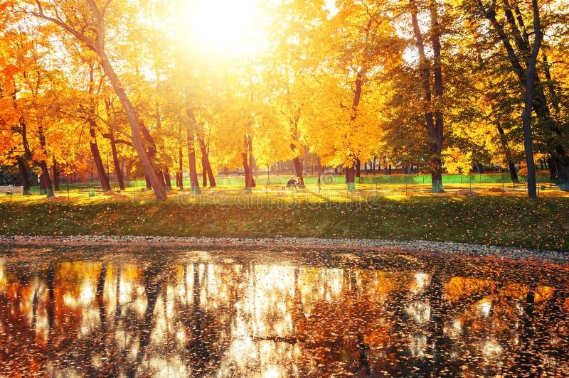 De herfstlandschap van zonnig die de herfstpark door de zonneschijn-herfst park met de herfstbomen en vijver in zonlicht wordt aa stock foto
