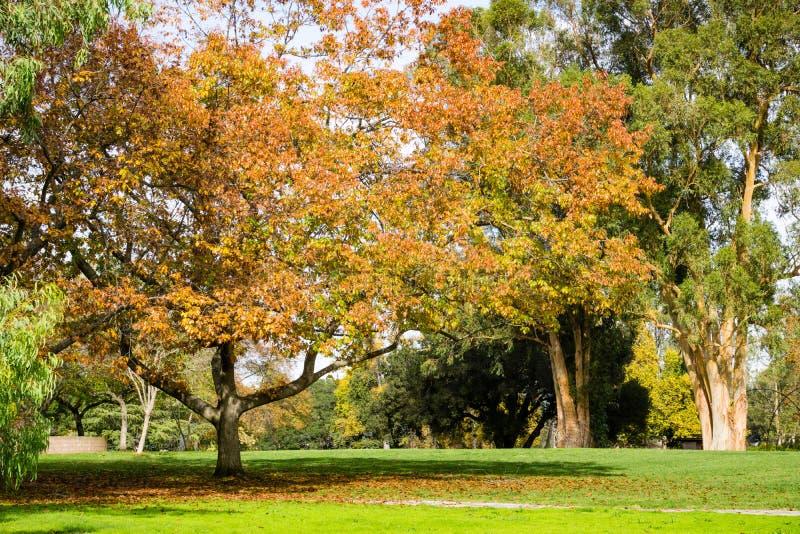 De herfstlandschap, Vasona-het Park van de Meerprovincie, de baaigebied van San Francisco, Los Gatos, Californië royalty-vrije stock afbeeldingen
