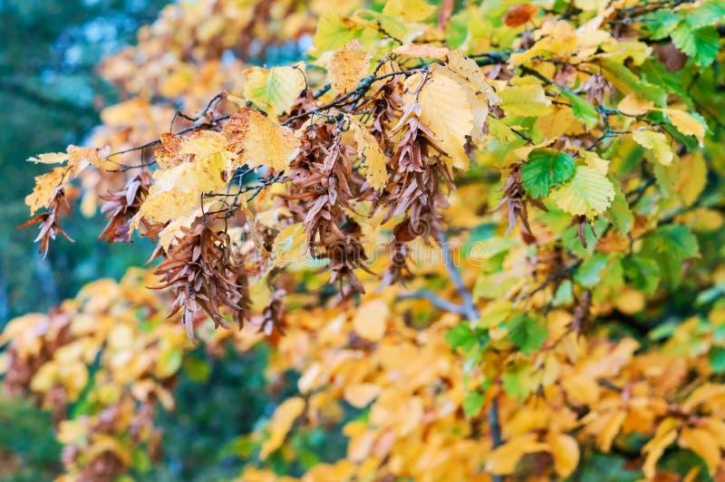 De herfstlandschap, vergeelde en rood geworden bladeren van bomen royalty-vrije stock afbeeldingen