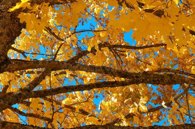 De herfstlandschap, vergeelde en rood geworden bladeren van bomen stock foto's