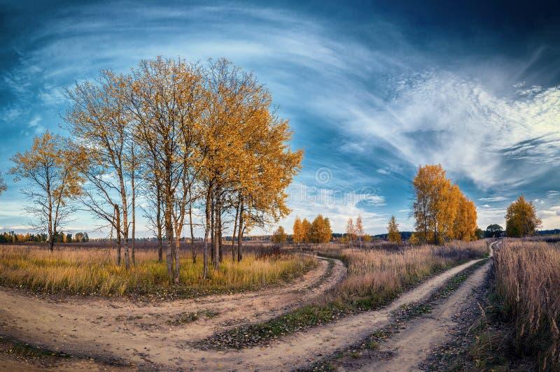 De herfstlandweg onder bomen op gebied royalty-vrije stock foto's