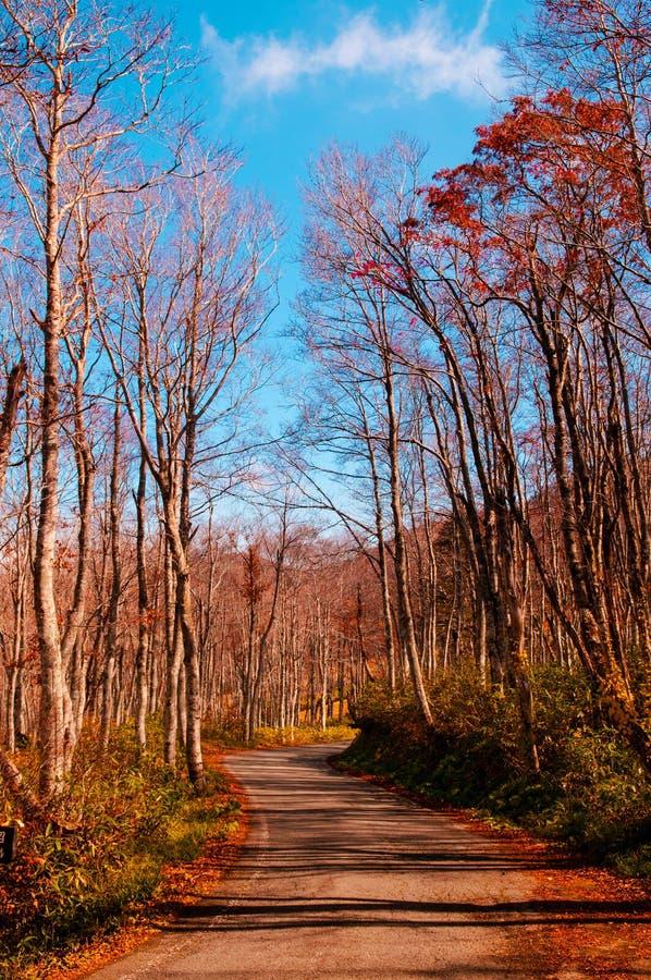 De herfstlandweg in Yamagata stock afbeeldingen