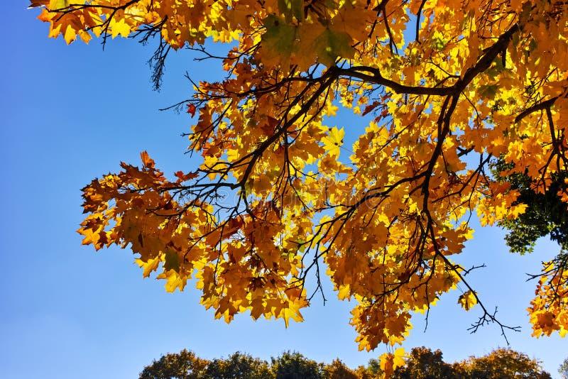 De herfstmening met Gele bomen in South Park in stad van Sofia royalty-vrije stock foto