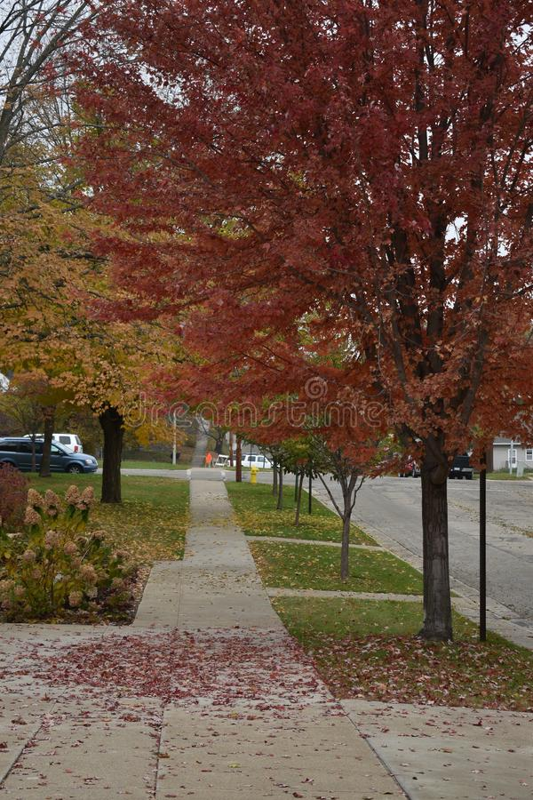 De herfstmening van een straat in een kleine stad in de herfst met het gekleurde bladeren vallen stock foto