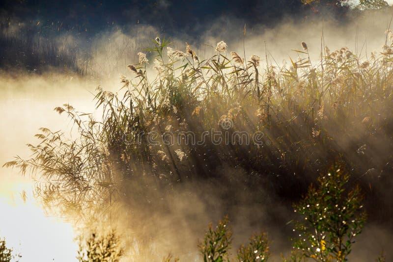 De herfstmist in een regenwoud stock afbeelding