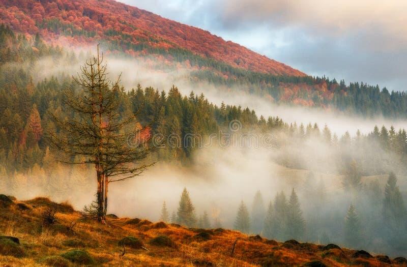 De herfstochtend Nevelige dageraad in de Karpaten stock afbeeldingen