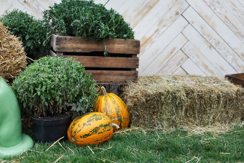 De herfstoogst, rijpe groenten, natuurvoeding royalty-vrije stock fotografie
