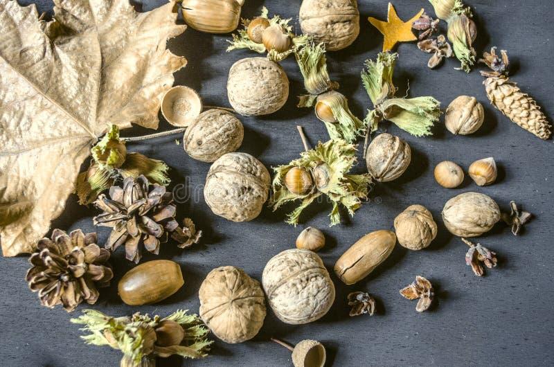 De herfstoogst van hazelnoten met droge peduncle, noten, denneappels, eikels op zwarte achtergrond stock fotografie