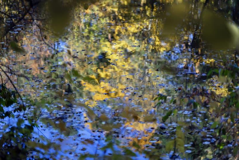 De herfstpalet Bezinning van kleurrijke bomen in water, gelijkend op waterverf Daling, landschap van het Natuurlijke bos stock afbeeldingen