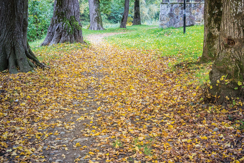 De herfstpark royalty-vrije stock afbeelding