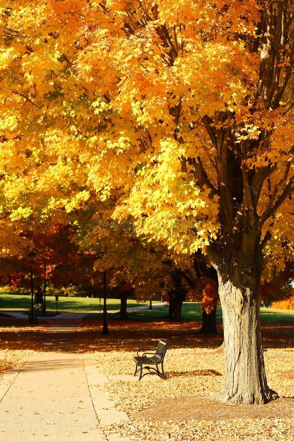De herfstpark Bank onder gele esdoornboom stock foto