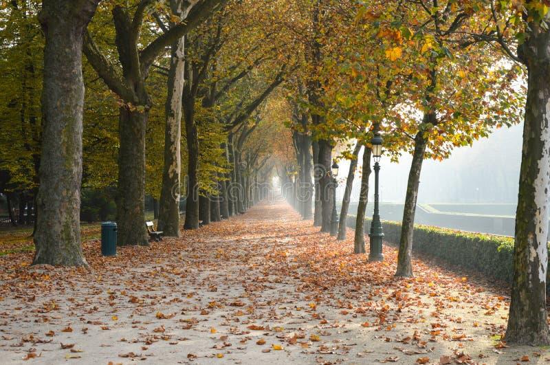 De herfstpark in Dusseldorf Duitsland stock foto