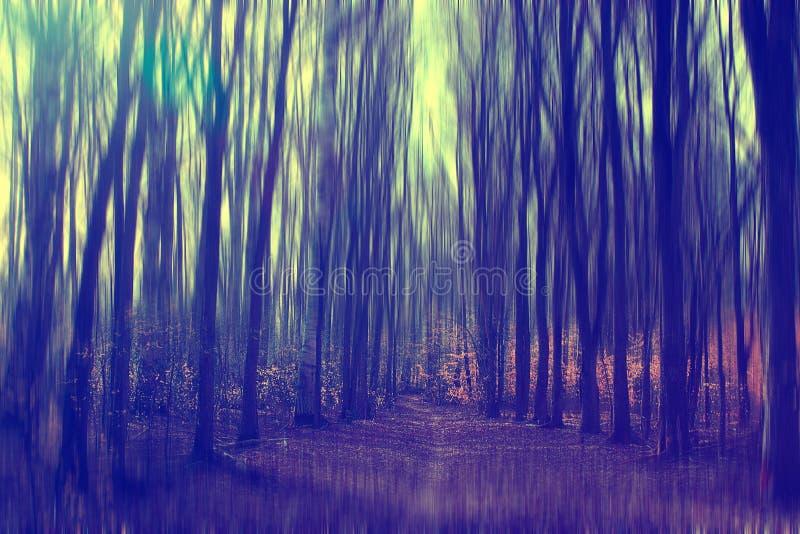 De herfstpark met naakte bomen stock foto's