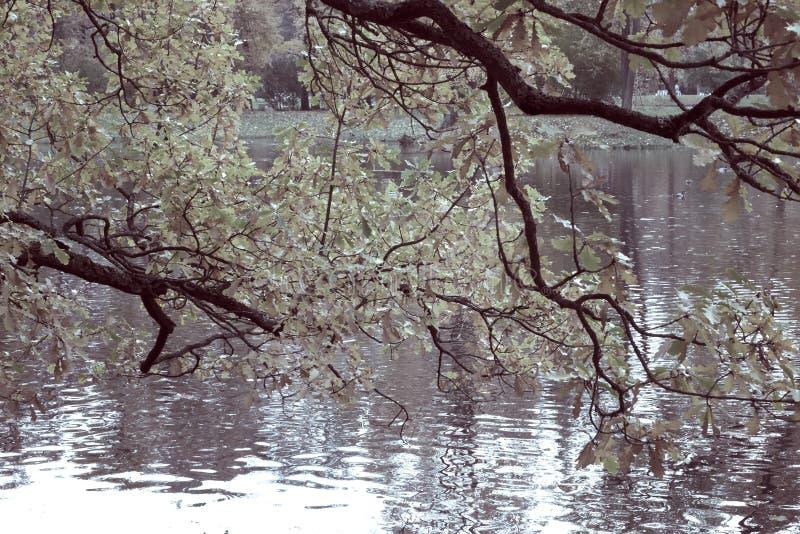 De herfstpark met de rivier toning royalty-vrije stock foto's
