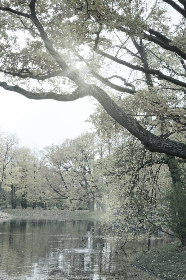 De herfstpark met de rivier toning royalty-vrije stock afbeeldingen