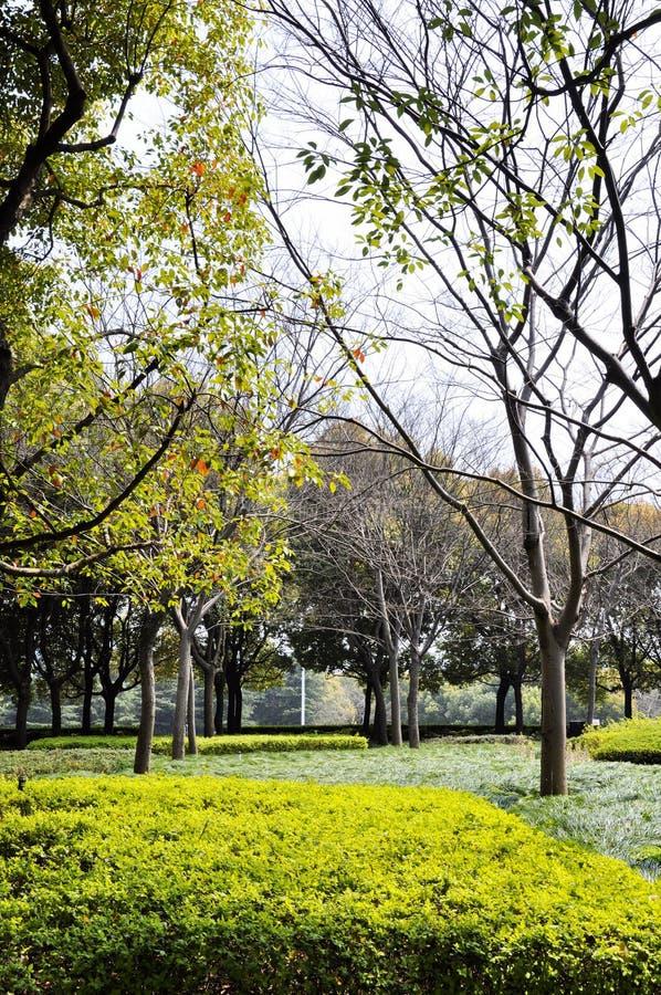 De herfstpark in de ochtend in bewolkt weer Het park van de beeldherfst September-landschappen in het park Donker weer Parkstegen royalty-vrije stock fotografie