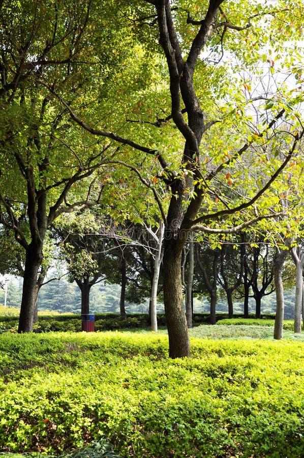 De herfstpark in de ochtend in bewolkt weer Het park van de beeldherfst September-landschappen in het park Donker weer Parkstegen stock afbeeldingen