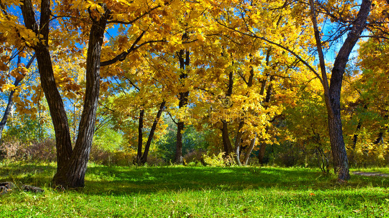 De herfstpark van de dag royalty-vrije stock foto