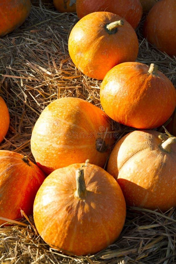 De herfstpompoenen op stro royalty-vrije stock foto's