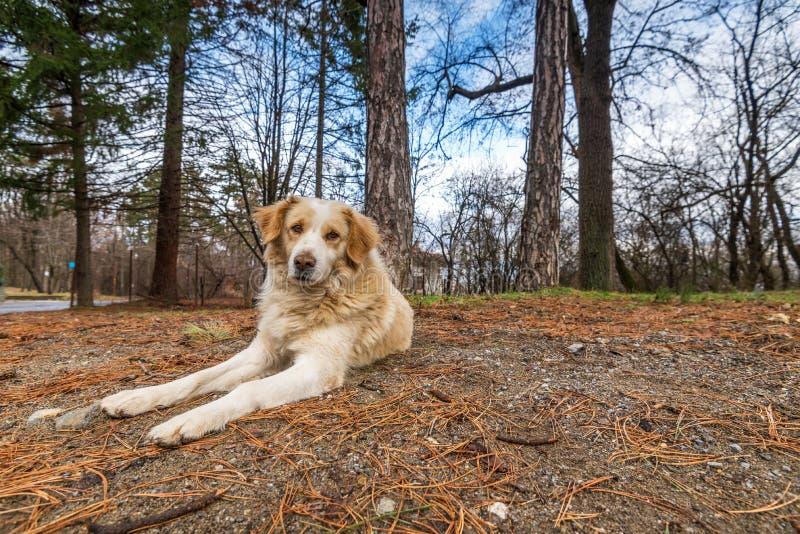 De herfstportret van mooie Hond stock foto's
