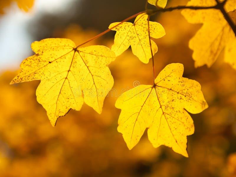 De herfstpracht stock foto's