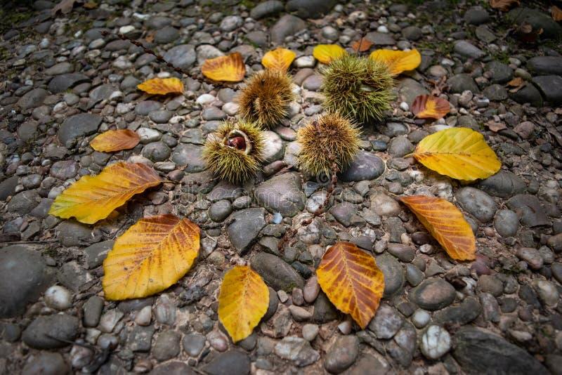 De herfstsamenstelling met bladeren en kastanjes royalty-vrije stock afbeelding