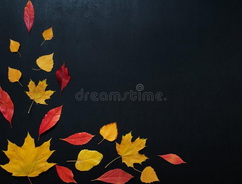 De de herfstsamenstelling met kleur verlaat ornament op achterleiraad met exemplaarruimte de heldere tekst van de het seizoenherf stock afbeeldingen
