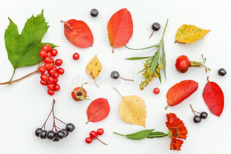 De de herfstsamenstelling van de herfst wordt gemaakt plant viburnum, chokeberry lijsterbessenbessen, dogrose, bladeren en bloeme stock afbeeldingen