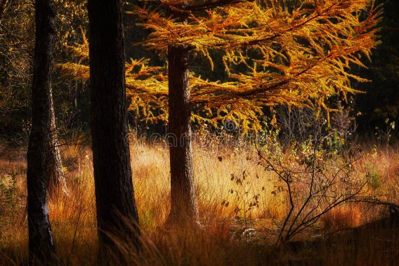 De herfstscène in een donker bos royalty-vrije stock foto's