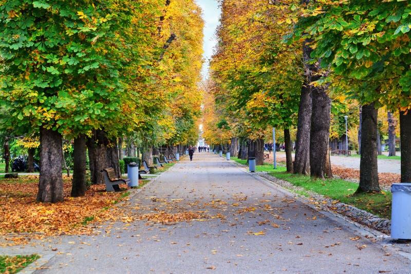De herfstscène met kastanjebomen in geel en bruin stock fotografie
