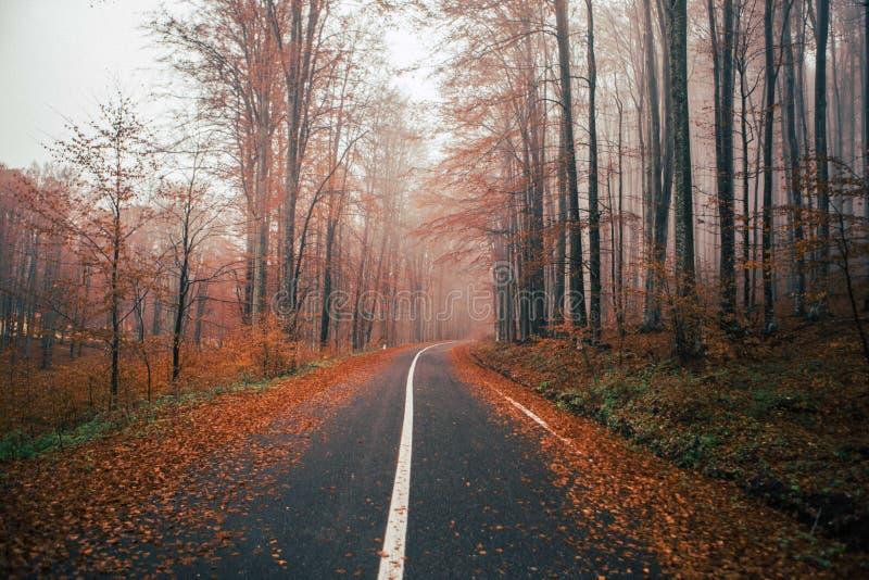 De herfstscène met weg in bos stock afbeeldingen