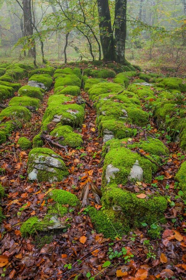 De herfstseizoen in het bos stock fotografie