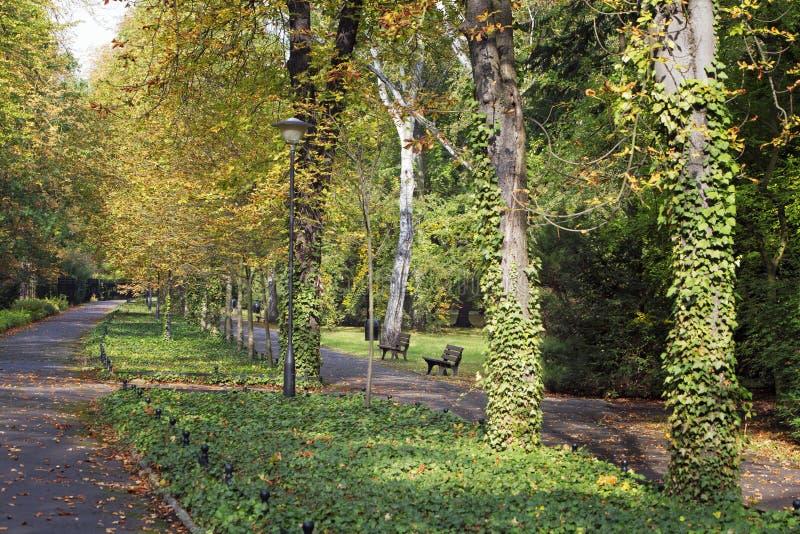 De herfststeeg in het park royalty-vrije stock foto