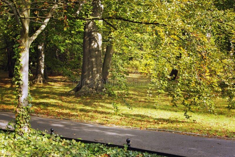 De herfststeeg in het park royalty-vrije stock afbeelding