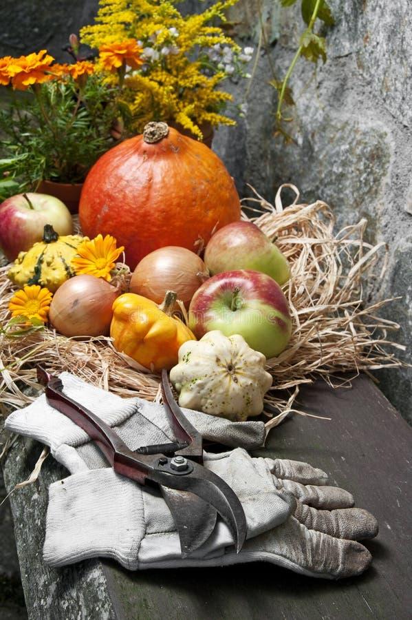 De herfststilleven van de tuin stock afbeelding
