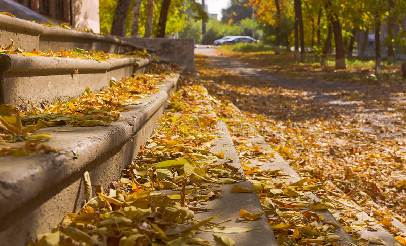 De herfsttapijt van gele bladeren op de portiek van de oude school royalty-vrije stock afbeelding