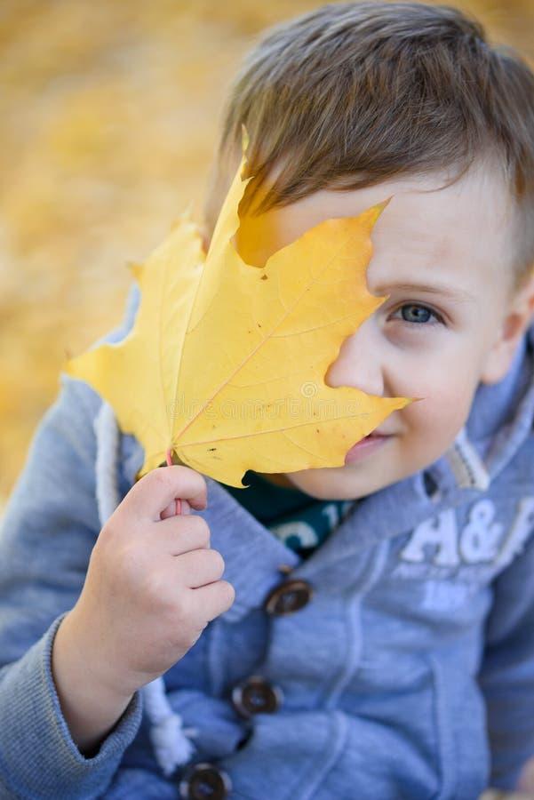 De herfsttijd, mooie esdoorn gele bladeren in de handen van de jongen stock foto