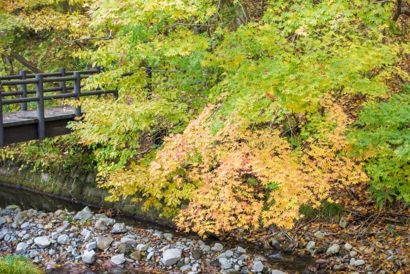 De herfstverlof in bos stock afbeelding
