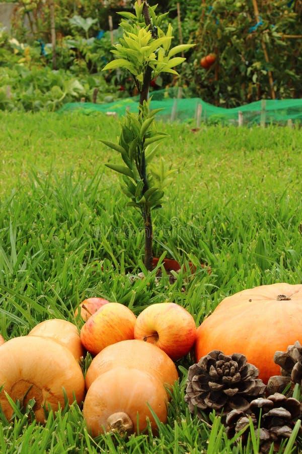 De herfstvoedingsgewas groenten in de tuin royalty-vrije stock fotografie