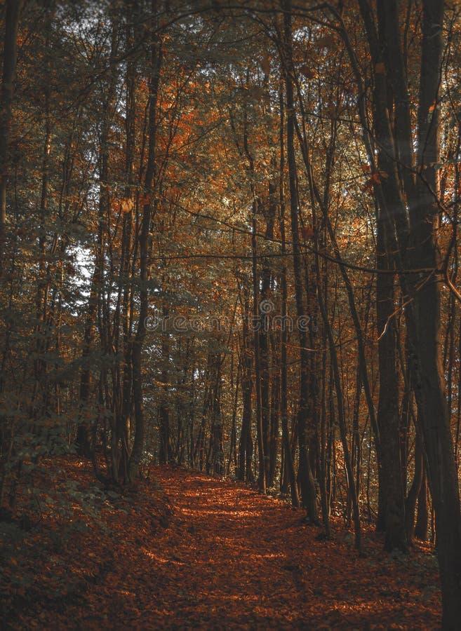 De herfstweg stock afbeeldingen